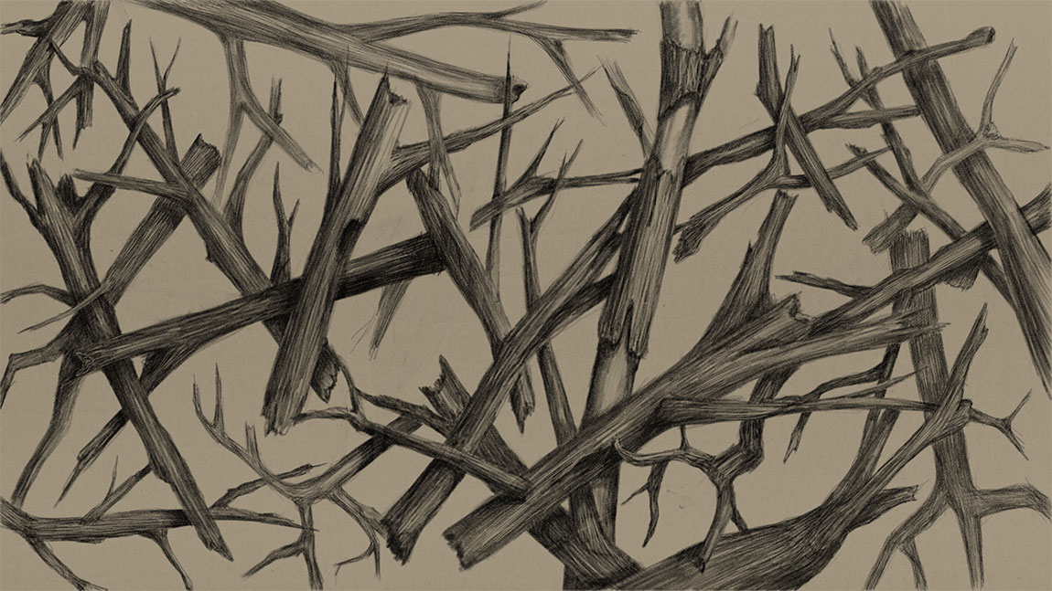 A Graphite Pencil Drawing of Branches using Graphiter App for Windows 8