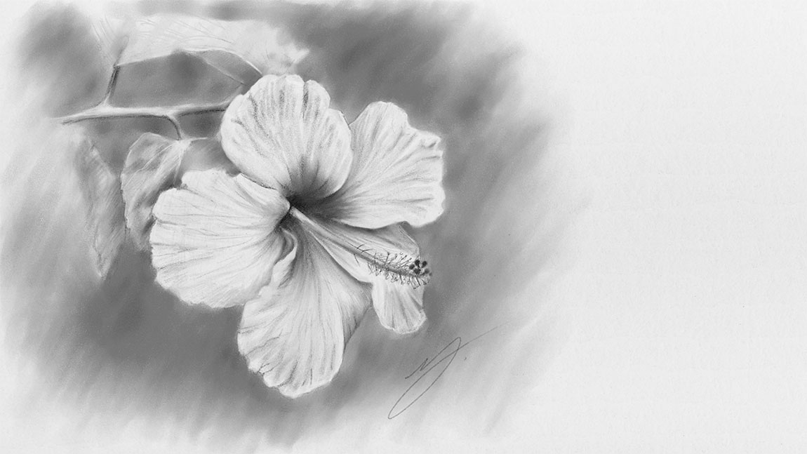 A Graphite Pencil Drawing of a Flower using Graphiter App for Windows 8