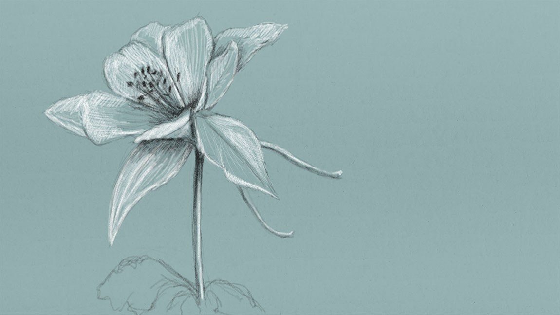 A Graphite Pencil Drawing of a Flower on a Green Toned Paper using Graphiter App for Windows 8